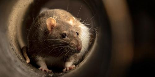 vahinkotarina-rotta