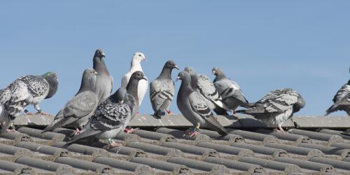 vahinkotarina syyskuu - pulut katolla